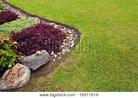 Contrast Plants Near Balance