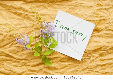 i am sorry messages card and little purple flowers on paper crumpled