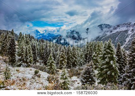 Evergreen forests in the valley covered with the first snow. New Years is soon. On the Alpine Pass Giau of the Dolomites first snow fell