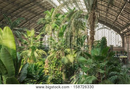 MADRID, SPAIN - NOVEMBER 19, 2016: The greenhouse at the Atocha railway station in Madrid, Spain