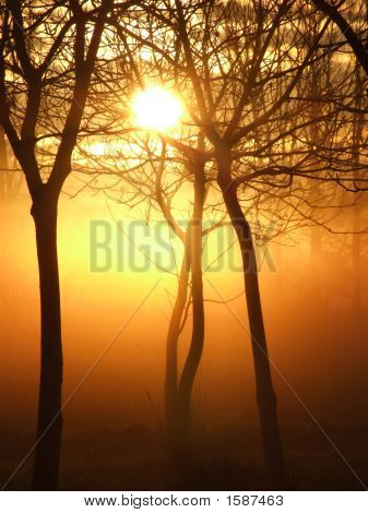 Mystical Sunrise