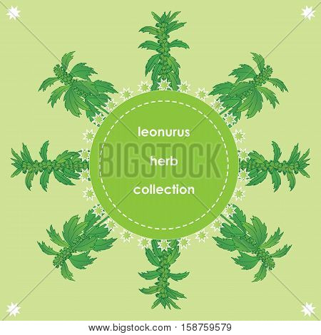 Herbs spices and seasonings collection. Vector hand drawn illustration of a herb leonurus