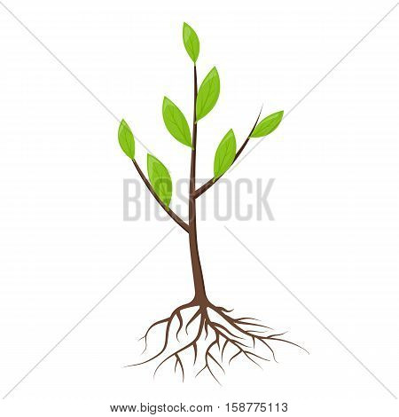 Tree With Roots And Leaves