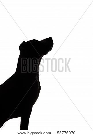 dog silhouette on white background dark contour of a puppy sitting and looking up