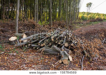 A pile of logs and branches on deforestation