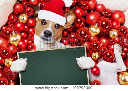 Christmas Santa Claus Dog And Xmas Balls As Background