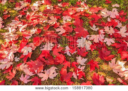 the natural spectacle of the colour change of the leaves