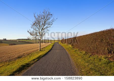 Country Road And Ash Tree
