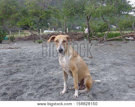 Perro con mirada muy tierna, y ganas de alimentarse