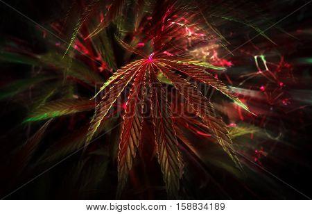 red leaf cannabis. marijuana in red light.