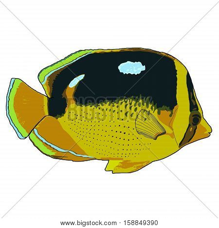 Fourspot Butterflyfish Vector Illustration on white background