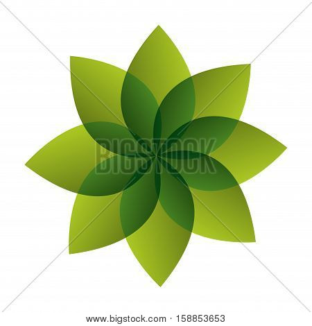 plant leafs isolated icon vector illustration design
