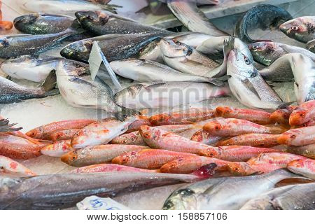 Fresh fish at the Vucciria market in Palermo, Sicily
