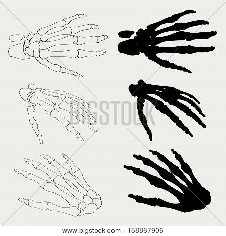 Human hand bones anatomy isolated vector illustration. Black and white hand bones for medical or Halloween design. Human hand bones skeleton silhouette collection set. Realistic hand bones EPS 10.