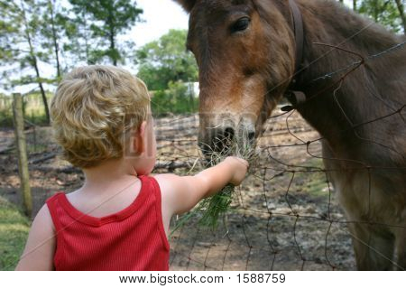 Feeding The Donkey