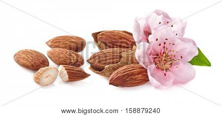 Almonds nuts with flowers