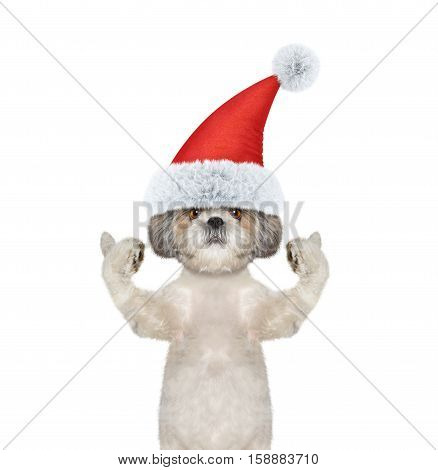 Cute santa dog showing thumb up and welcomes -- isolate on white