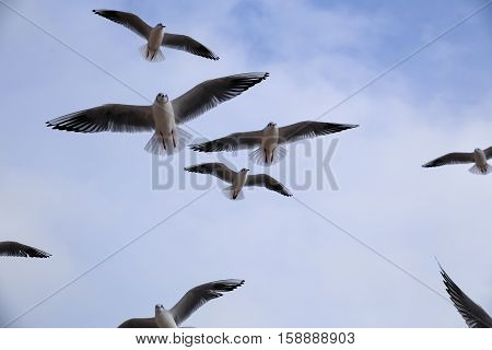 Seagulls flying in the sky, background ocean