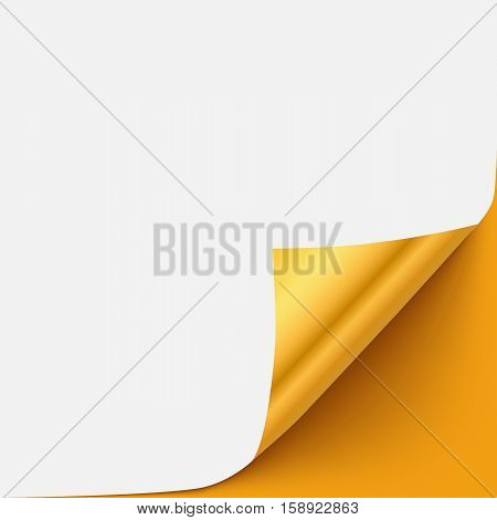 Gold vector paper curled corner template with shadow and space for text. Curl paper page element for advertising, promo, sale, web sites, print.