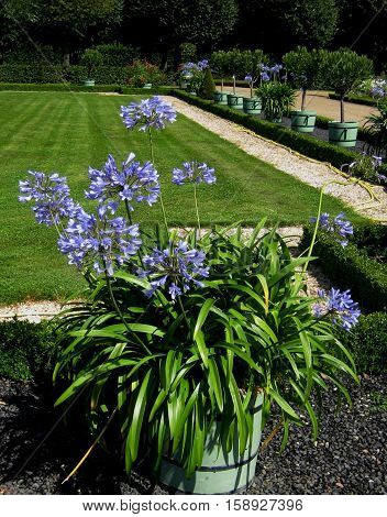 photos of landscape design of the Park with beautiful blue flowers as the source for printing and design