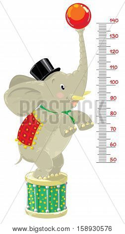 Meter wall or height meter of funny elephant in top hat, checkered blanket and scarf with ball and drum in a circus stance. Children vector illustration with a scale to measure growth. Height chart