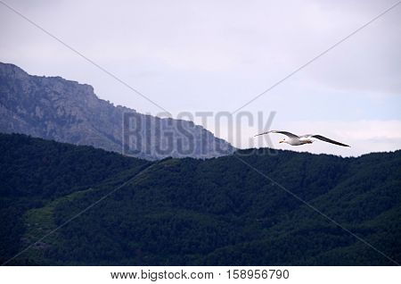 A seagull flying close to the island shore.