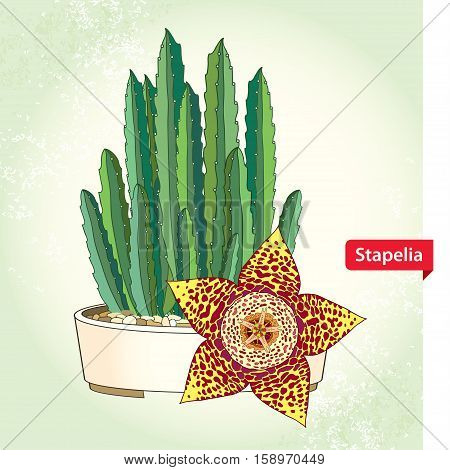 Vector illustration with Stapelia flower in the round pot on the textured background. Genus of low-growing stem succulent plants. Series of different succulent plants for summer design.