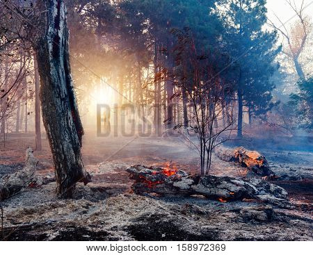Forest fire. fallen tree is burned to the ground a lot of smoke when vildfire