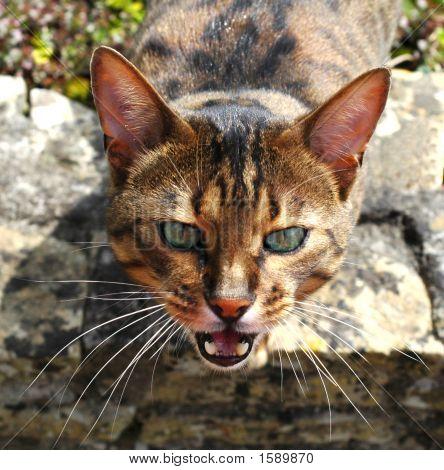 Catseye3