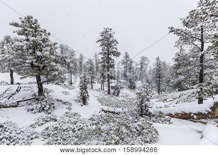 Heavy winter snowfall in progress at Bryce Canyon National Park.