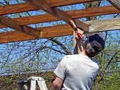 Man Staining Arbor