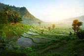 Rice tarrace in mountains. Bali. Indonesia