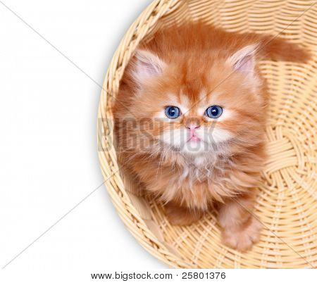 Kitten in straw basket on a white background