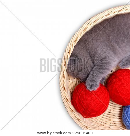 Kitten in straw basket with ball of yarn on a white background