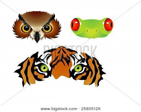 vector tiger owl frog eyes