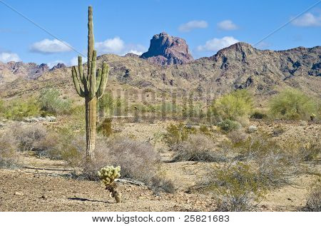 Deserto do Arizona com cactus saguaro