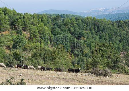 Umbra Forest. Puglia. Italy.