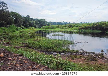 Near Rwenzori Mountains In Africa