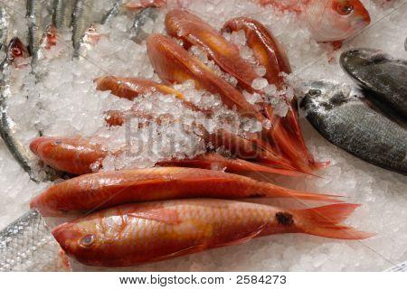 Salmonetes sobre losa de Pescadero