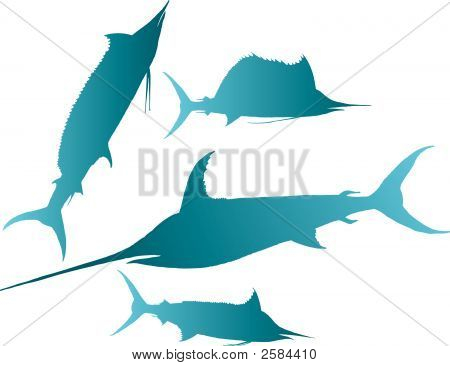 Marlin Sailfish Vector