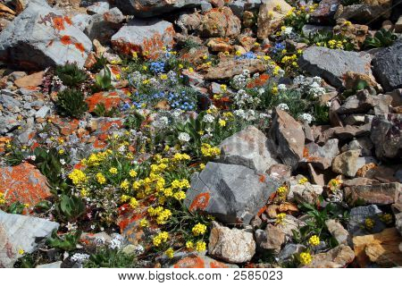 Natures Rock Garden