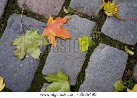 Maple Leaves On Cobblestones