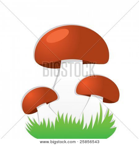 Simple mushrooms
