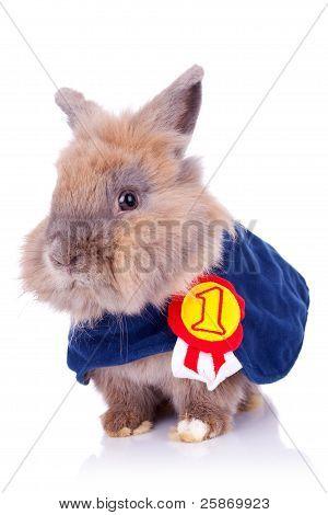 Little Bunny Champion
