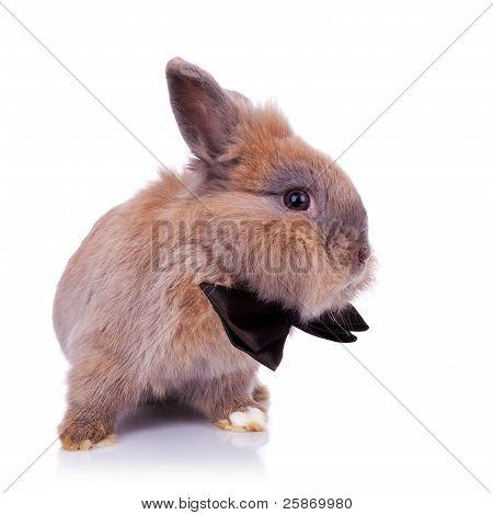 Little Bunny Gentleman