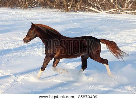 Skipping horse