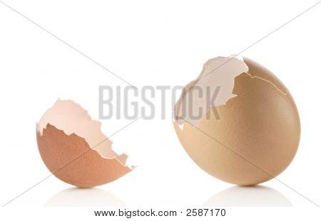 Empty Eggshell