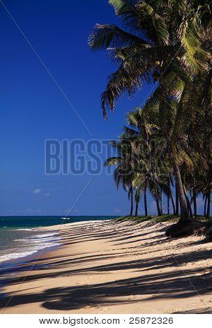 Exotic tropical palm beach Brazil