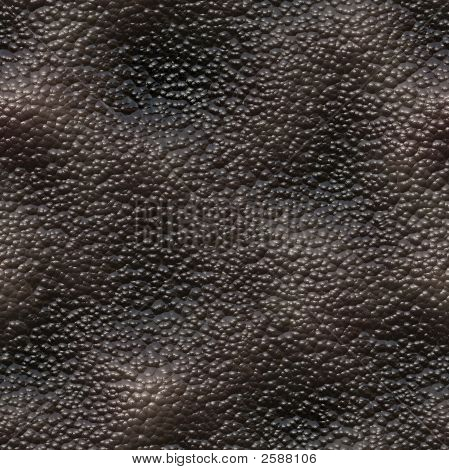 Snail Skin