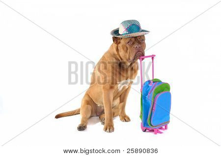 Dog is Ready to go on a holiday trip